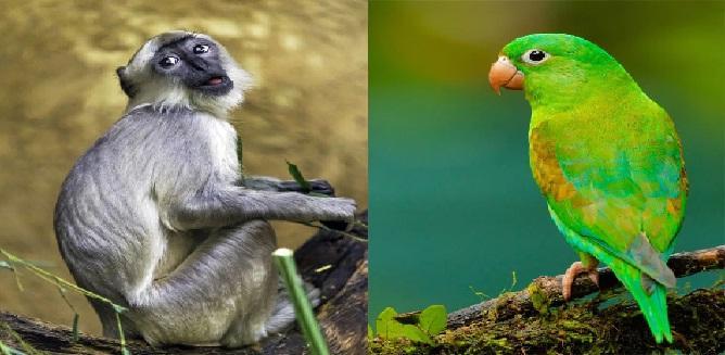 UP News : तोता और लंगूर पालने पर लगी पाबंदी