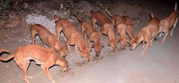 भारत के किस गांव के कुत्ते करोड़पति हैं?