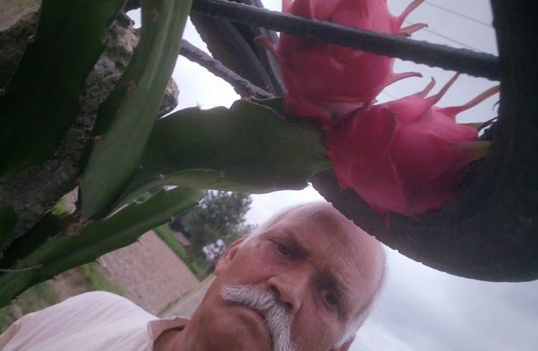 सुलतानपुर के किसान 'गया' ने 'ड्रैगन फ्रूट' की खेती कर पेश की मिशाल, 25 साल तक मिलेगा लाभ