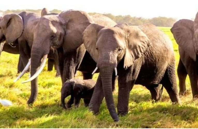 सोनभद्र: हाथियों के झुंड ने गांव में किया हमला, बच्ची की मौत