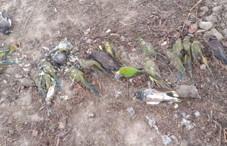 बलरामपुर में दो दर्जन से अधिक मृत पक्षी मिलने से दहशत