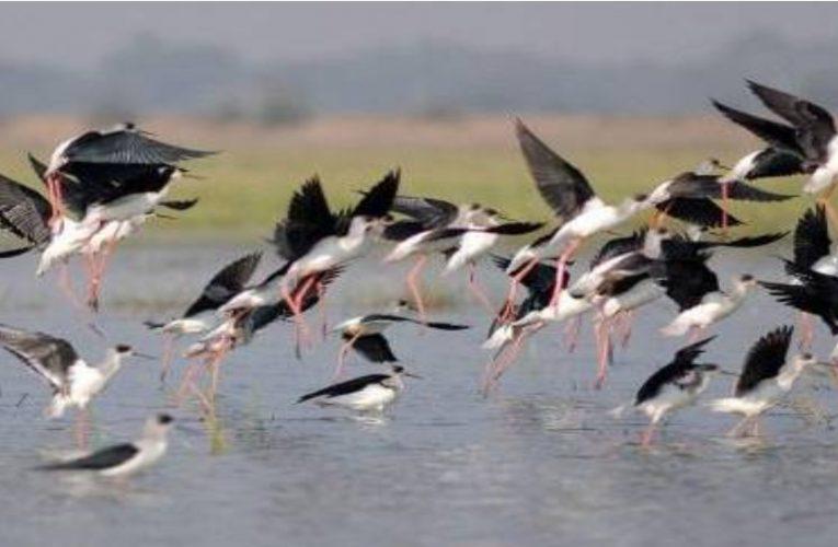 State News : दिल्ली में भी फैला बर्ड फ्लू, पक्षियों के आठ सैंपल पाए गए पॉजिटिव