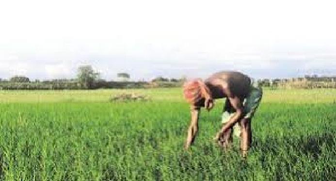 Shravasti News:किसानों की आय दोगुनी करने में सहायक है मसालों की खेती