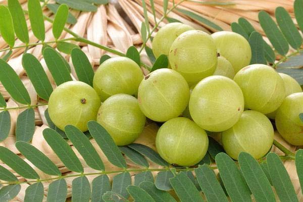 आंवले के सेवन से ठीक रहेगी सेहत